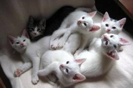 orphan kittens