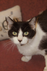 cat of week 07-13-13 donna
