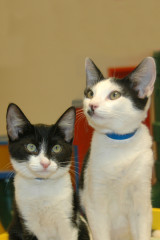 cats of the week 08-03-13 chuck and johnny