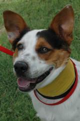 dog of week 08-24-13 doug