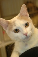cat of the week 11-16-13 ryder web