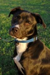 dog of week 11-23-13 king web