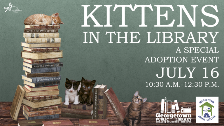Kitten in the Library!